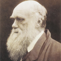 Charles Darwin, 1868–1869; photograph by Julia Margaret Cameron