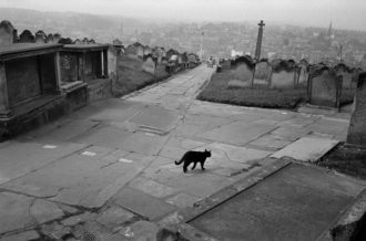 A cat in an English cemetery, 1978; photograph by Josef Koudelka