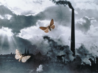 A pair of peppered moths superimposed on a photograph of Sheffield, England, after the Industrial Revolution. Since the mid-nineteenth century, there has been an increase in the black-winged form of the peppered moth in England. Evolutionary biologists ha