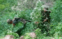 Mexican soldiers, members of a special anti-narcotics brigade, uproot marijuana plants in the La Puntas zone in Sinaloa State in western Mexico, August 14, 1995