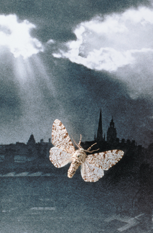 A peppered moth