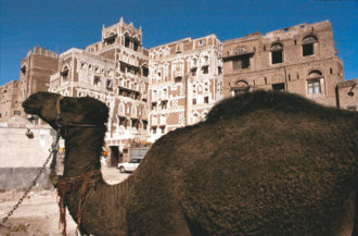 A camel in the old city of Sanaa, Yemen, 1999