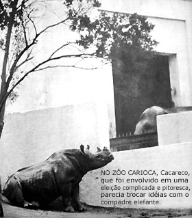Cacareco.jpg