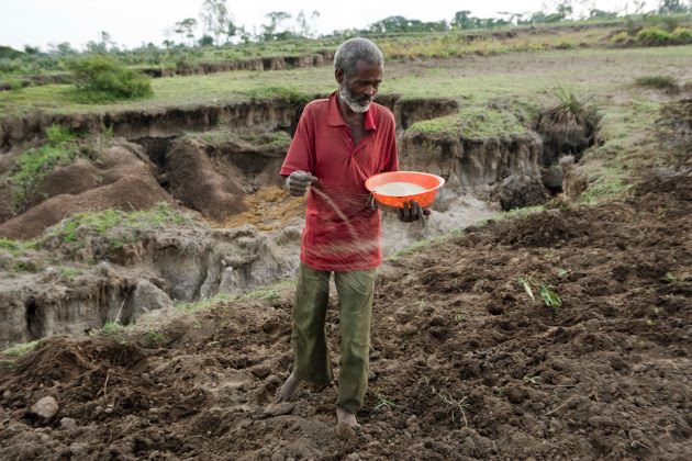 Farmer Makaba Wasu planting a grain crop.  He lost part of his one hectare field due to river erosion.  Jaffa Village, Wolayita Zone, Ethiopia, August 19, 2008