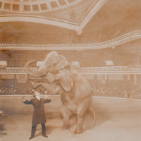 Harry Houdini performing with Jennie the elephant at the Hippodrome, New York City, 1918. In one of his most famous tricks, he made the elephant disappear: 'To this day,' Robert Gottlieb writes, 'no one understands how he did it.'
