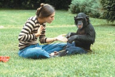 Joyce Butler speaking in sign language with Nim Chimpsky, 1970s