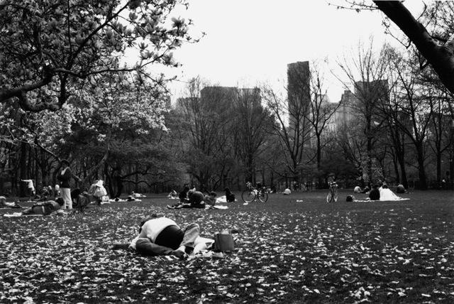 Central Park Lovers.jpg
