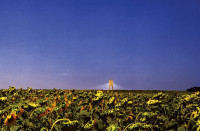A solar power plant with sunflowers in the foreground, Seville, Spain, 2007; detail of a photograph by Henrik Saxgren from his 2009 book Unintended Sculptures, which collects his images of man-made objects—paved roads, power lines, and wind turbines among them—that appear to have been abandoned to nature. It is published by Hatje Cantz.