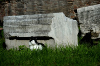 Resting in the Largo di Torre Argentina ruins in Rome, October 30, 2012