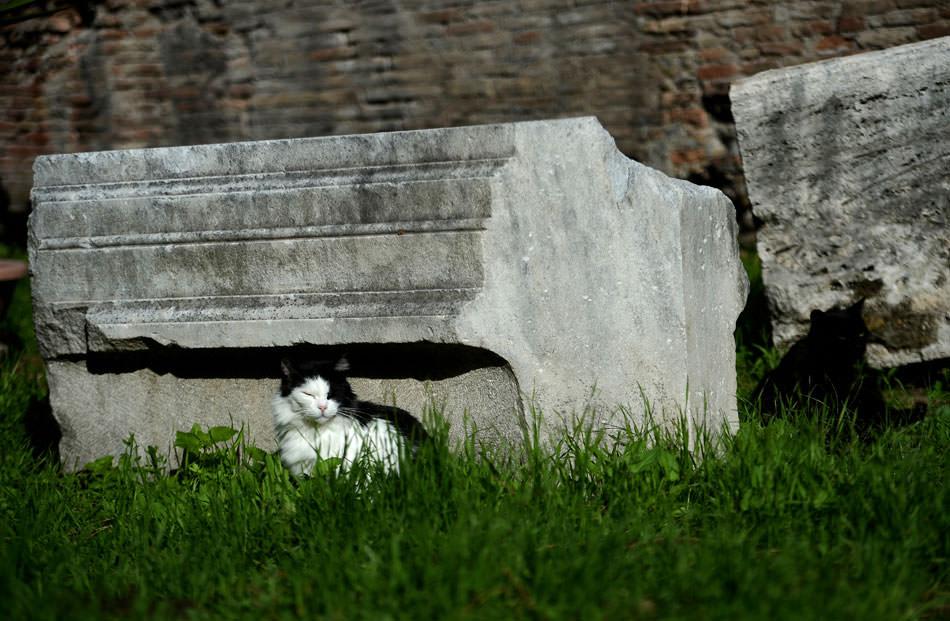 Cat in Area Sacra ruins.jpg