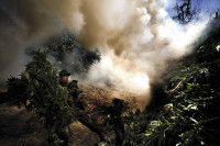 A Mexican soldier helping to destroy a marijuana plantation near Culiacán, Sinaloa, February 2009