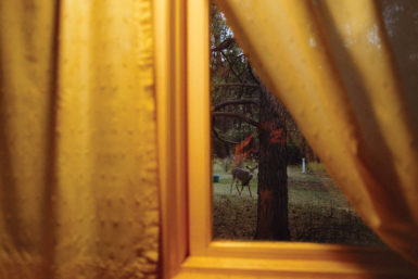 A deer seen through a kitchen window; photograph by Rebecca Norris Webb from her new book My Dakota, an elegy to her brother and her home state of South Dakota. It is published by Radius Books.