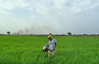 Workers at a Saudi-owned rice farm in Gambella, Ethiopia, March 22, 2012