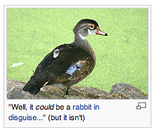 Wikipedia Duck.png