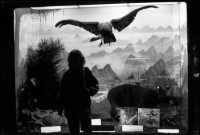 Zoological Museum, Strasbourg, France, 2000