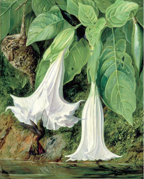 Rix Marianne North.png