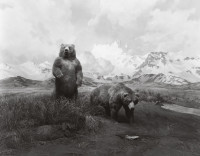 Alaskan Brown Bear, 1980