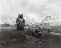 Alaskan Brown Bear, 1980