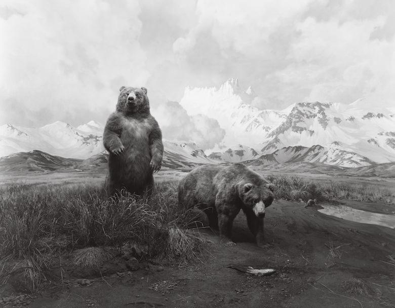 Schine Brown bear.jpg