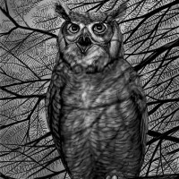 A great horned owl, nearly two feet tall, whose presence in John Marzluff's Seattle suburb 'directly benefits our garden by keeping the nonnative eastern cottontail rabbits on edge'