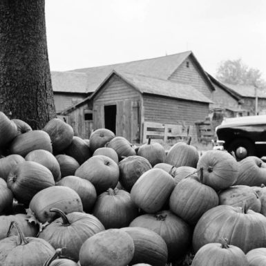 New Hampshire, 1954