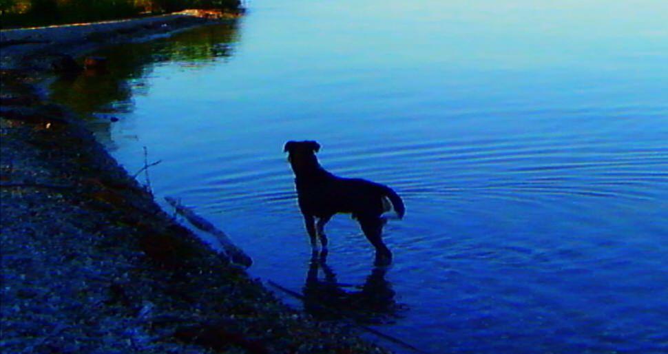 Godard Dog Lake.jpg