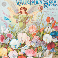 The cover of Vaughan's 1894 seed catalog, an example of what Elizabeth S. Eustis in Flora Illustrata calls the 'height of dazzling chromolithography' of late-nineteenth-century seed catalogs. 'The appropriation of chromolithography for commercial purposes repelled art critics, but delighted consumers,' Eustis writes. 'It remained the preferred embellishment of seed catalogs until color photography began to displace it around 1896.'