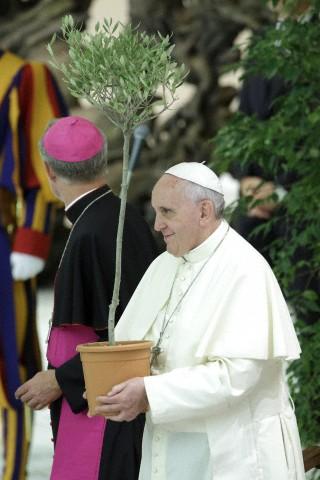 Pope Francis olive tree.jpg