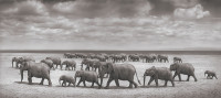 Elephant herds crossing a lake bed in the sun, Amboseli, Kenya, 2008; photograph by Nick Brandt