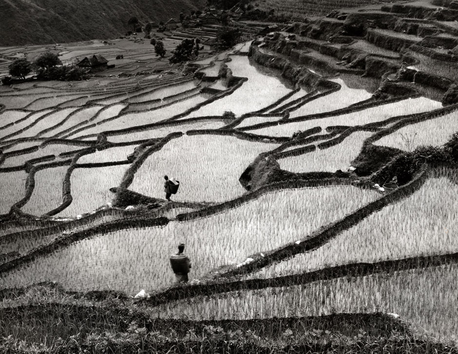 rice fields Okre.jpg