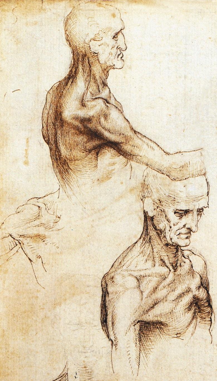 Detail of a drawing by Leonardo da Vinci, circa 1510–1511
