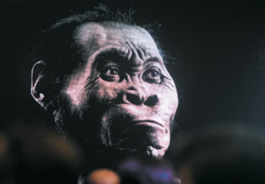 A model of Homo naledi, a newly discovered species of ape, at the Cradle of Humankind World Heritage Site, Maropeng, South Africa, September 2015