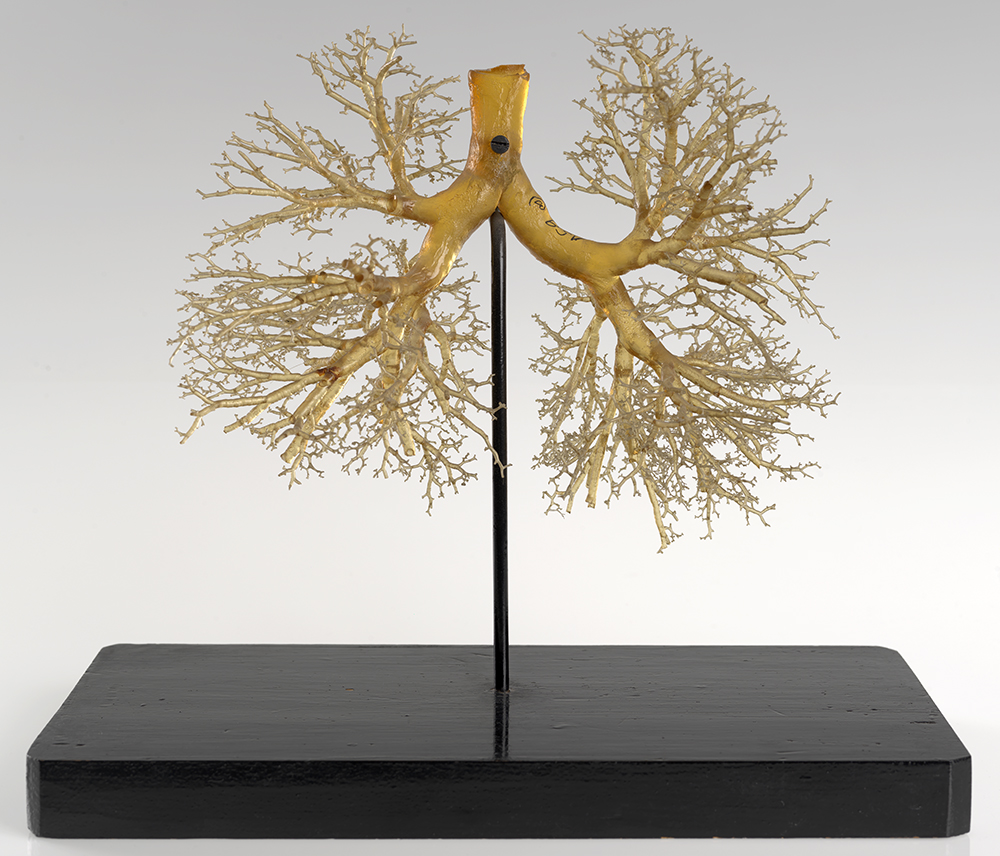 Visual Dissection - The Art of Anatomy   Calendar   The New York ...