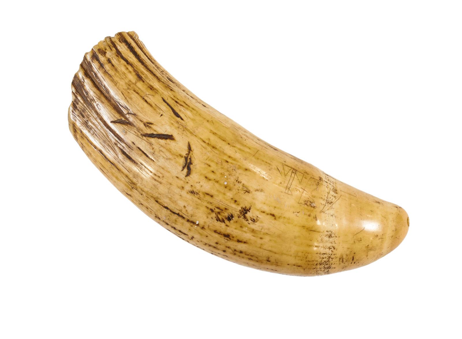Marina Warner: Tabua/tooth, circa 1900