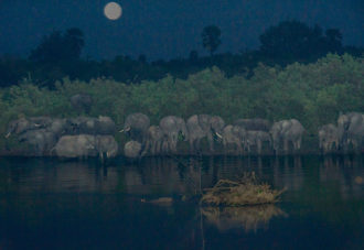 Elephants, which are diurnal and nocturnal and only sleep for short periods, 2015