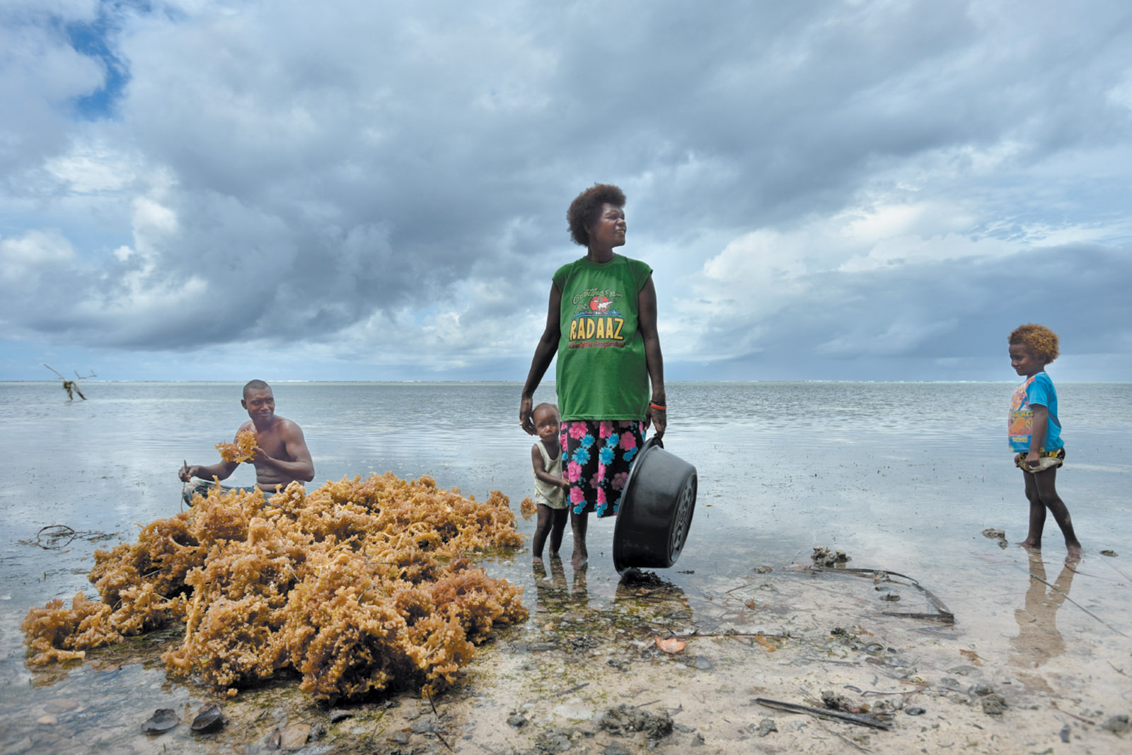 Papua New Guineans gathering seaweed for income in the Cartaret Islands, where rising sea levels are destroying their crops and drinking water, May 2013