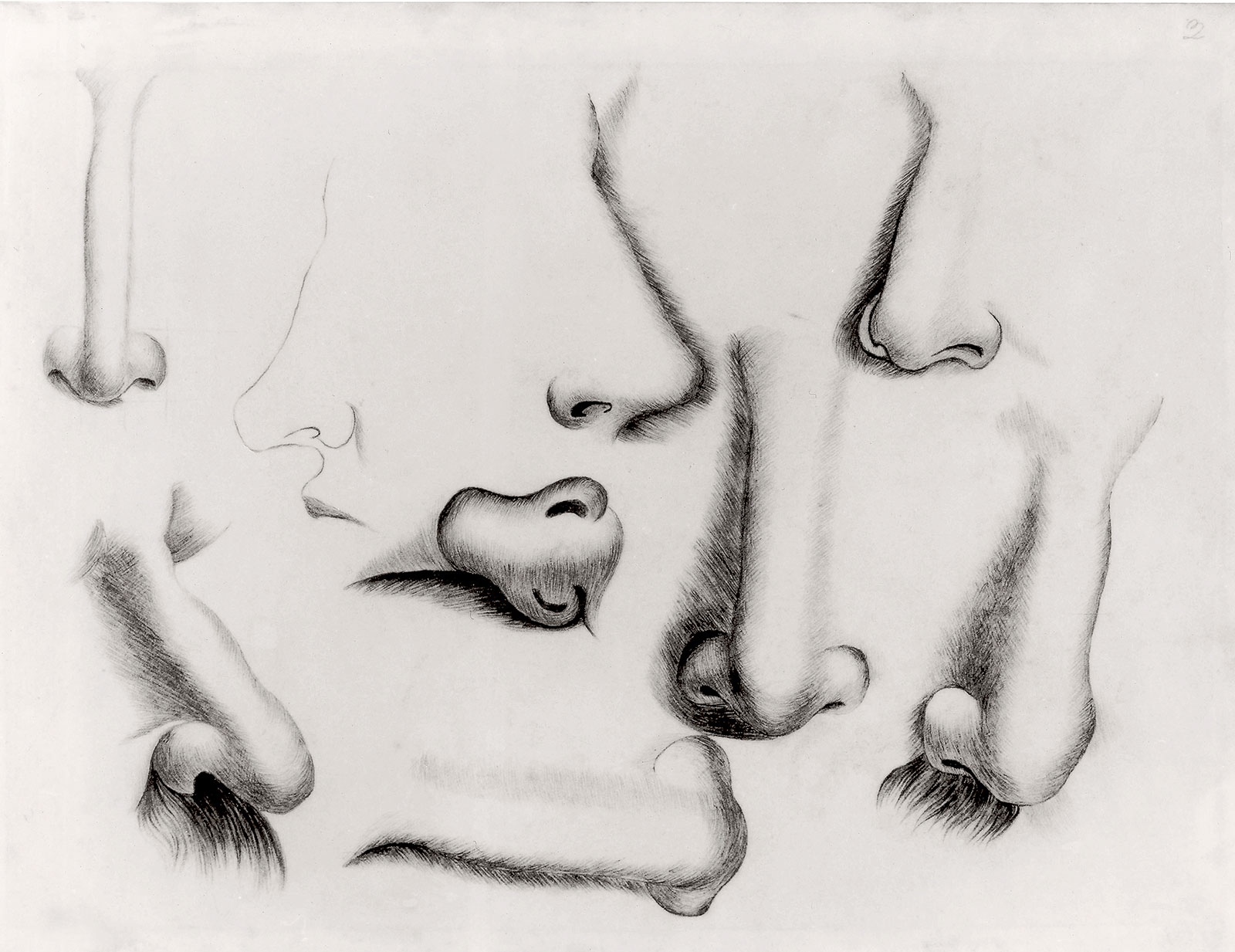 charlotte-bronte-noses