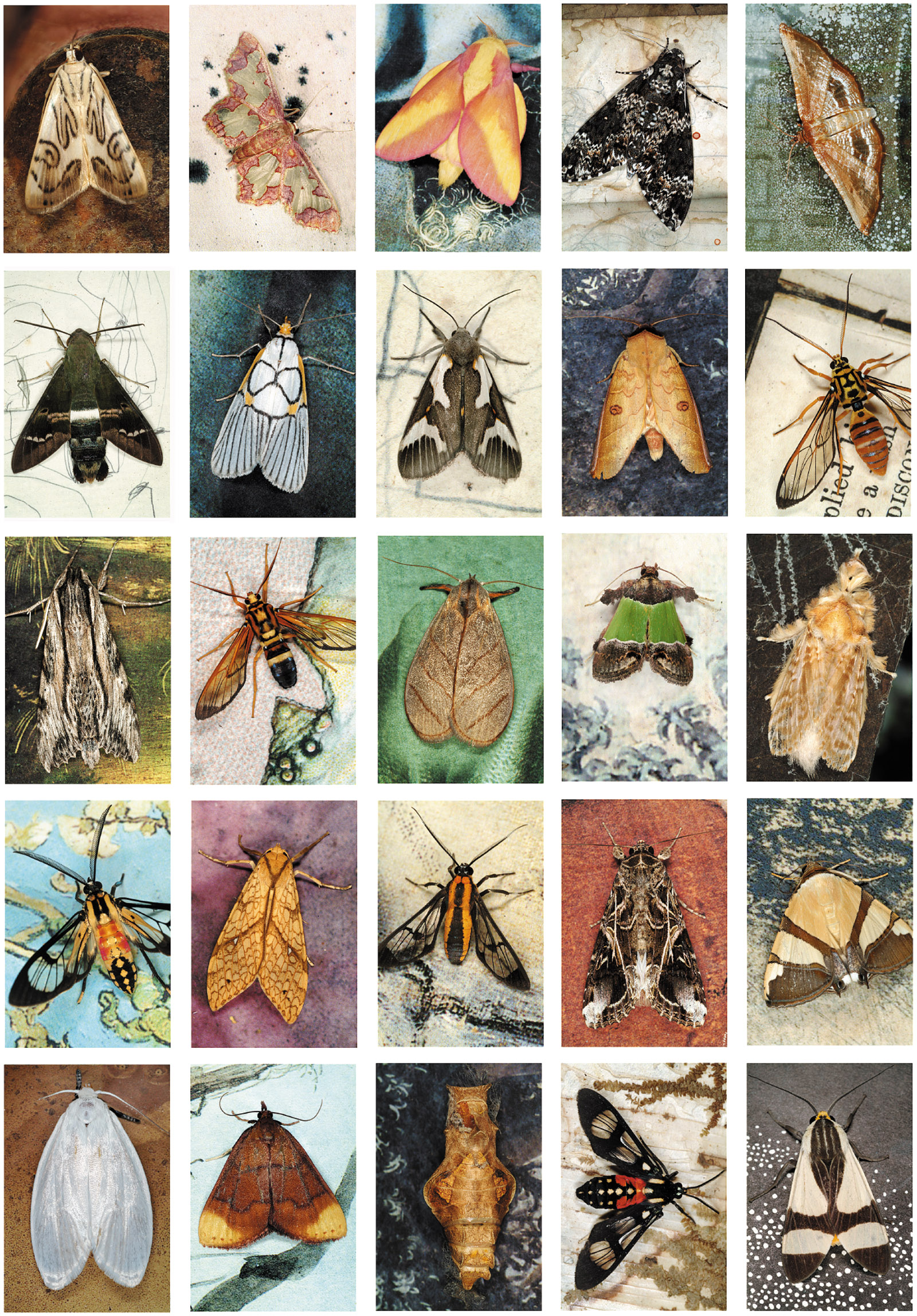 Emmet Gowin: Mariposas Nocturnas Index #44, Bolivia, 2011; from 'Hidden Likeness: Photographer Emmet Gowin at the Morgan,' a recent exhibition at the Morgan Library and Museum. Gowin's new book, Mariposas Nocturnas: A Study of Diversity and Beauty, collects fifty-one of his moth grids and will be published by Princeton University Press in September 2017.