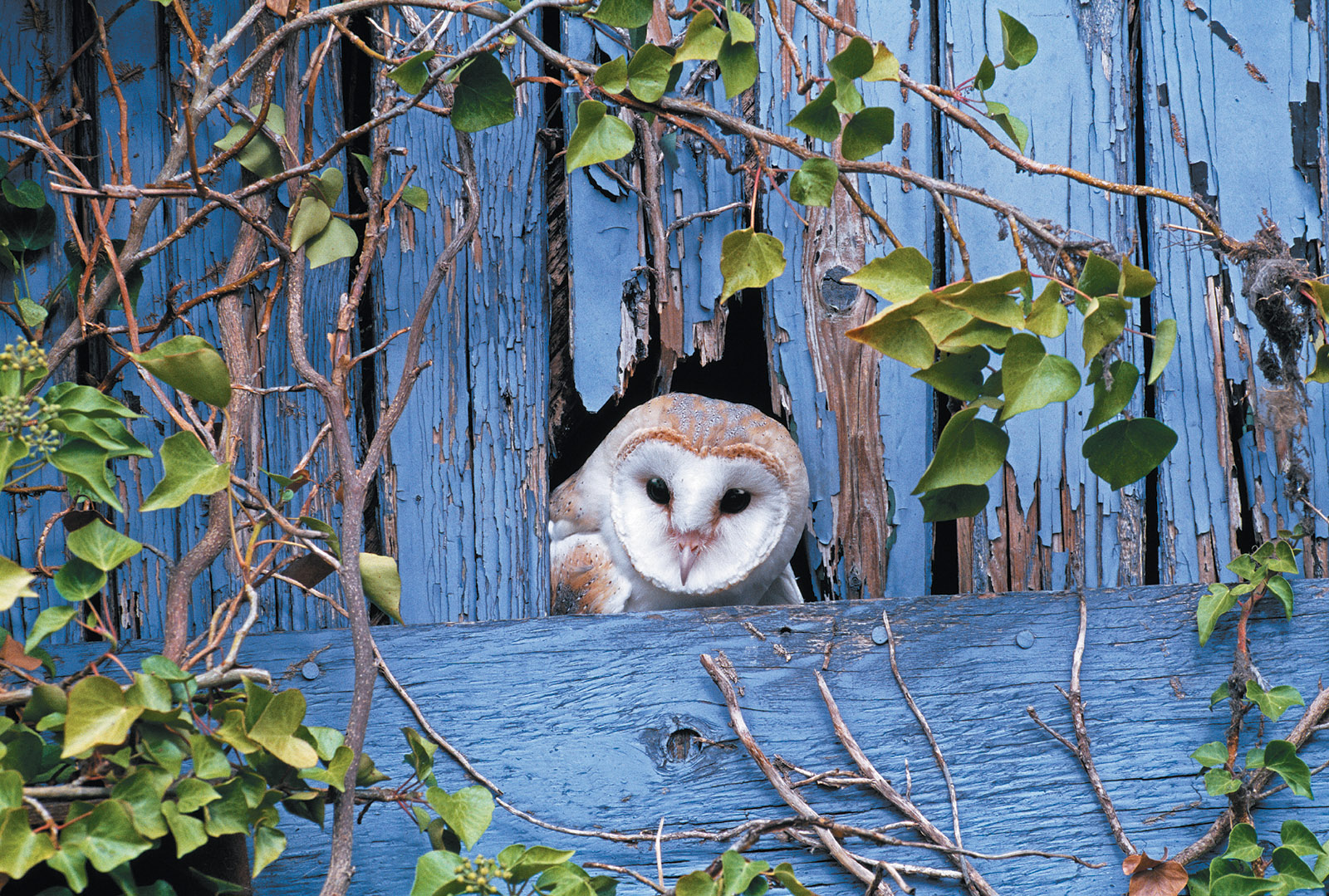 a parliament of owls by robert o paxton the new york review