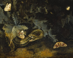 Otto Marseus van Schrieck: Forest Floor with Thistle and Snake (detail), circa 1665