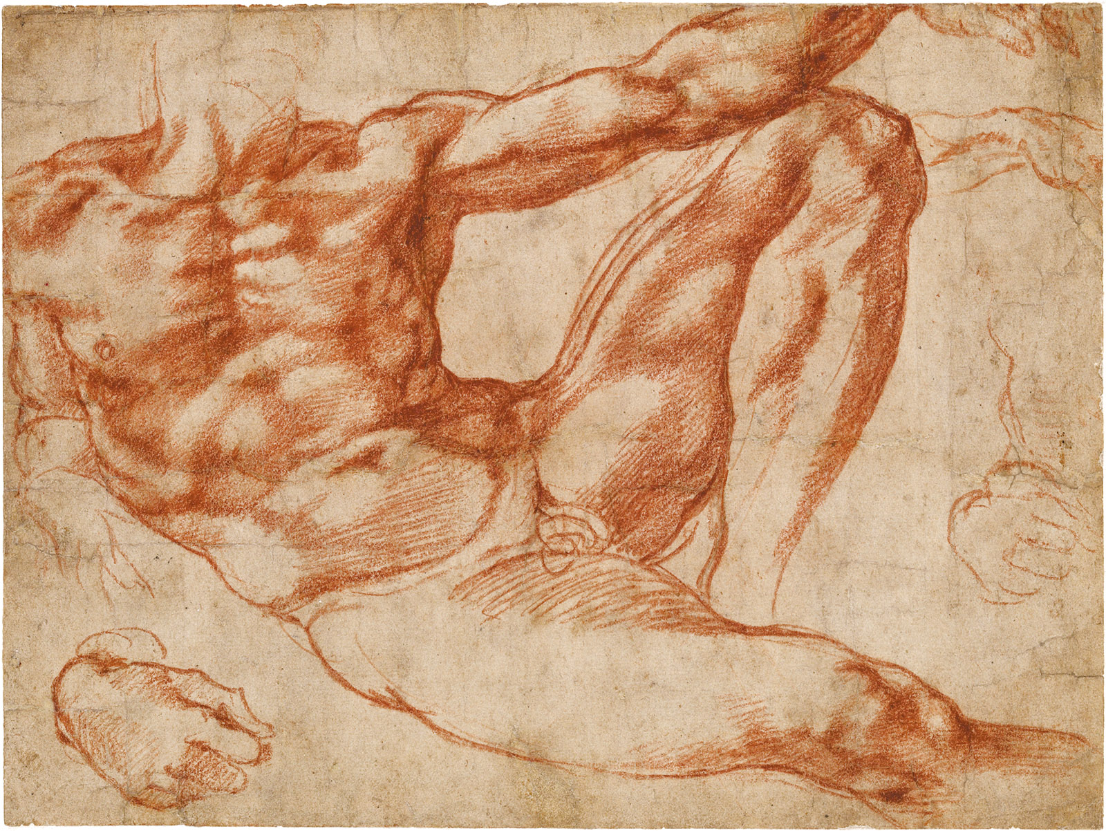 Michelangelo: Studies for Adam in the Fresco the Creation of Adam on the Sistine Chapel Ceiling, red chalk, 7 5/8 x 10 3/16 inches, 1511