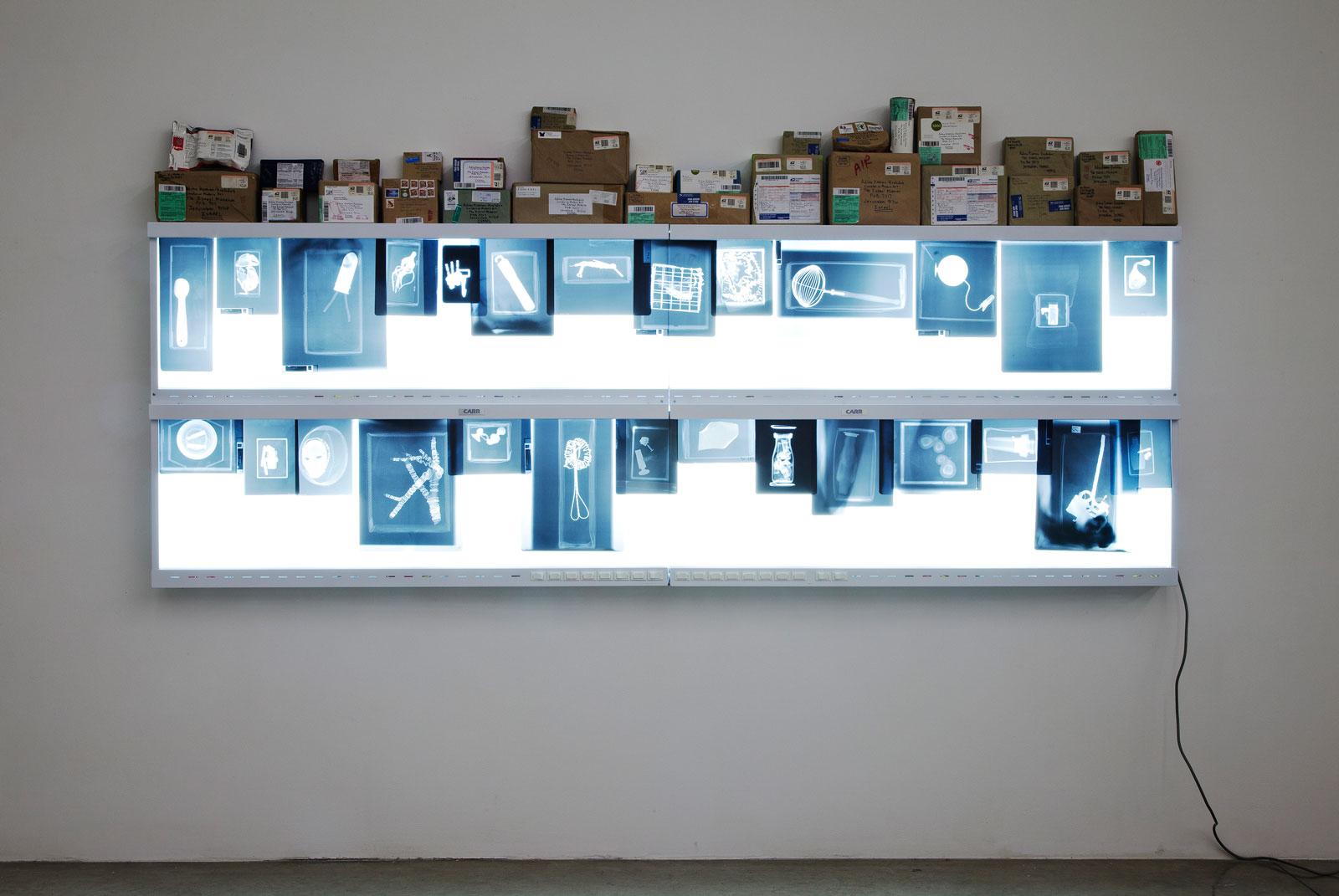 Mark Dion The Science Of Art By Jillian Steinhauer