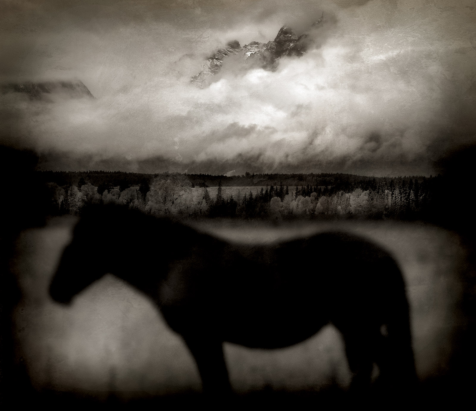 'Dark Horse,' Wyoming, 2005; photograph by Jack Spencer from his book This Land: An American Portrait, published by University of Texas Press