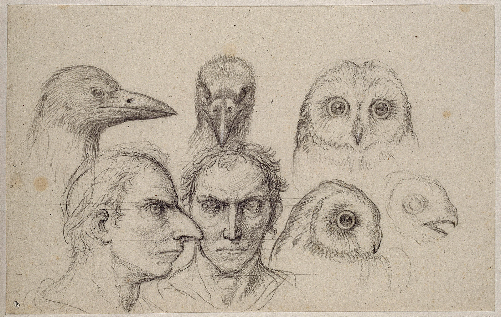 Heads of owls, crows, and men resembling crows; drawing by Charles Le Brun, circa 1668–1678