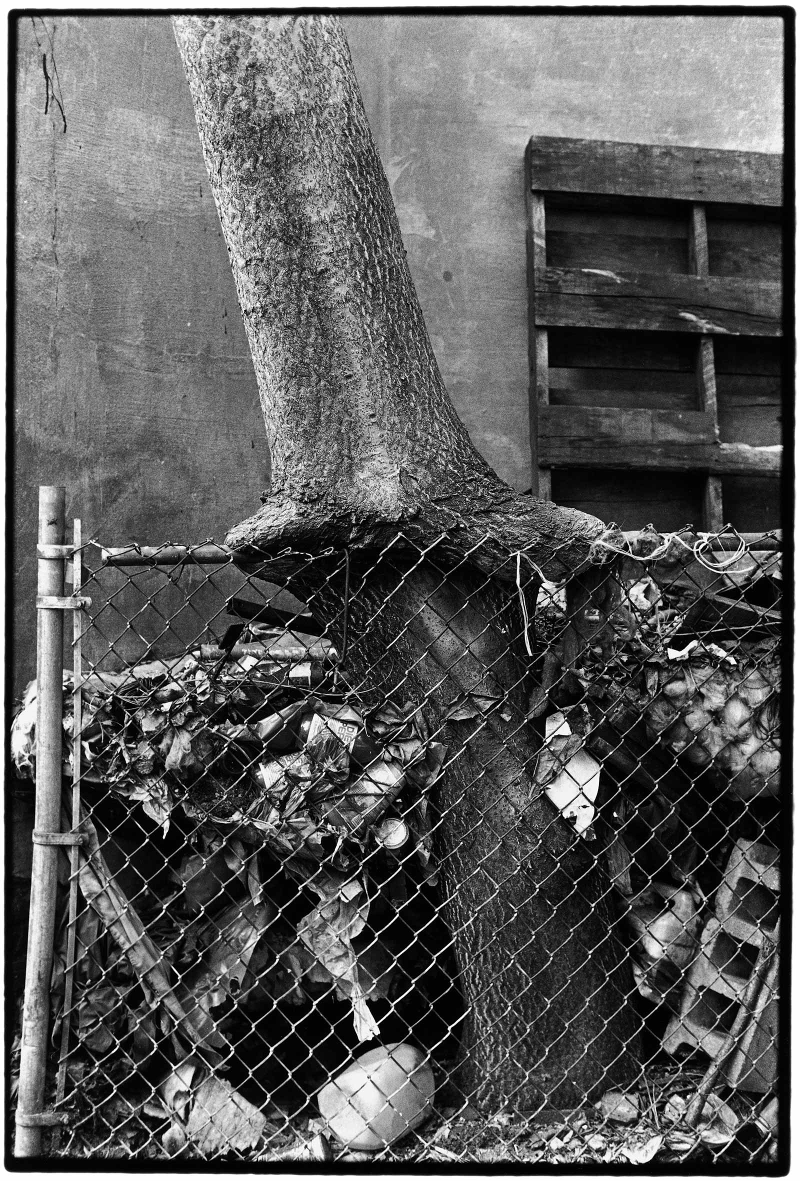leonard-tree