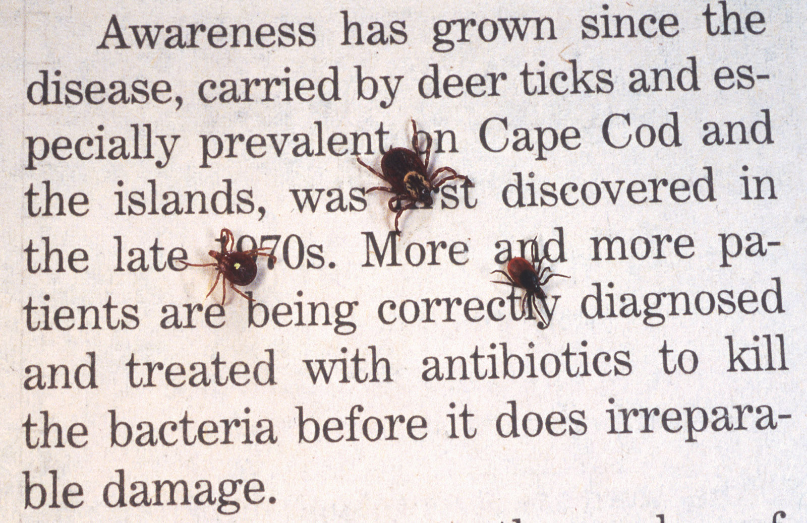 The Challenge of 'Chronic Lyme' | by Rachel Pearson | NYR