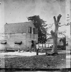 African Americans preparing cotton for the gin on Smith's plantation, Port Royal Island, South Carolina, 1861–1862