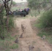 Phinda Private Game Reserve, Zululand, South Africa, 2002