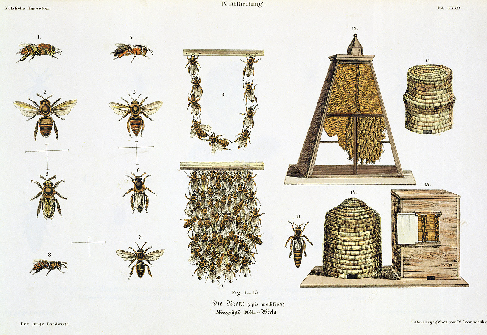 """Matthias Trentsensky: Bees and Bee-keeping, from """"The Young Landsman,"""" Vienna, 1845"""