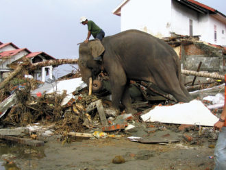 An elephant and mahout doing relief work after the 2004 Indian Ocean tsunami, Banda Aceh, Indonesia, January 2005